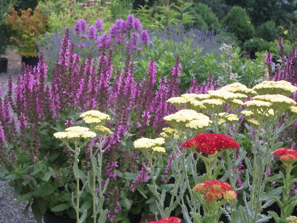 Some of our selection of perennials for a sunny position.